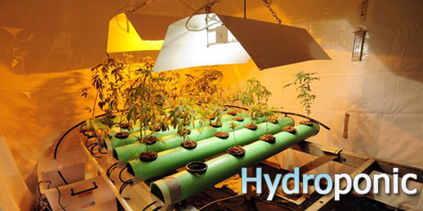 how to make hydroponic weed